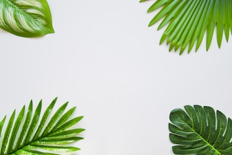 Different type of green leaves on the corner of the white background