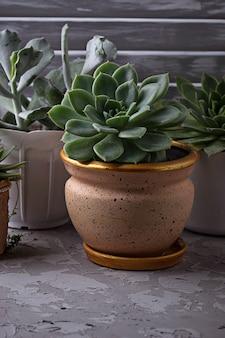 창턱에 냄비에 다육 식물의 다른 유형. 선택적 초점