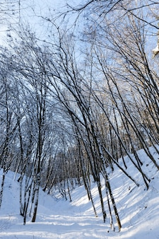 Different types of bare deciduous trees without foliage in the winter season, bare trees covered with snow after snowfalls and blizzards in the winter season