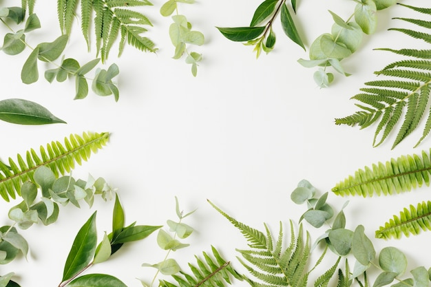 Different types of leaves with copy space for white backdrop