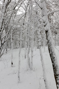 Различные виды голых лиственных деревьев без листвы в зимний период, голые деревья, покрытые снегом после снегопадов и метелей в зимнее время года.