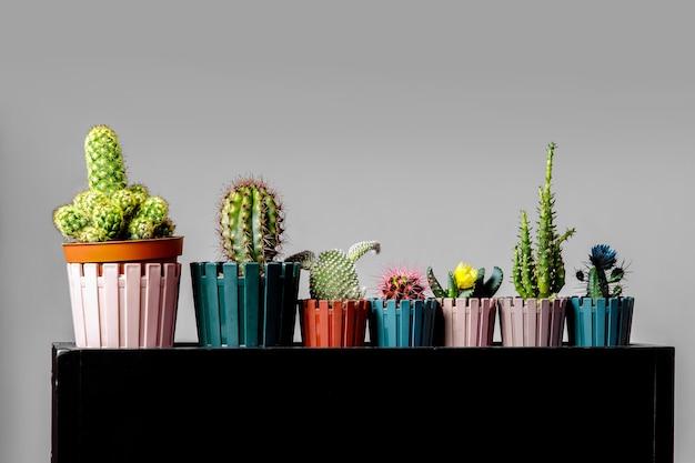 Различные виды кактусов на черной подставке.