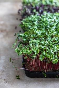 쟁반에 담긴 다양한 종류의 마이크로 그린 채식주의자 및 건강한 식생활 개념 유기농 생 마이크로그린
