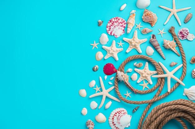 Различные виды ракушек и морских звезд на синем фоне с веревкой.