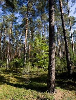 Different types of trees growing in a mixed forest, the autumn season of september.