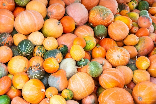 Different varieties of pumpkins
