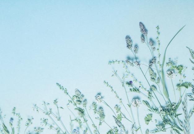 블루 종이 배경에 다른 야생 꽃