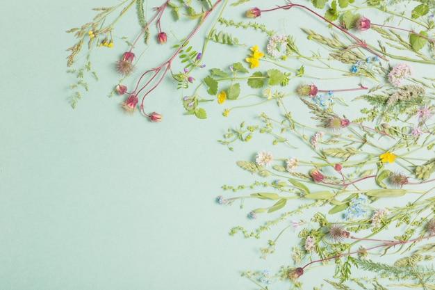 紙の背景に異なる野生の花