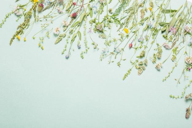 Различные полевые цветы на бумажном фоне