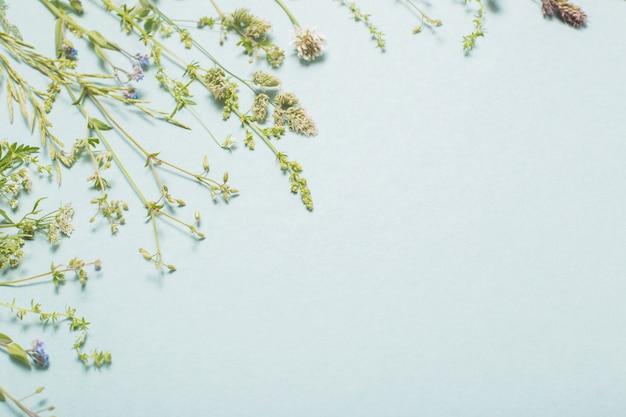 紙の背景にさまざまな野生の花