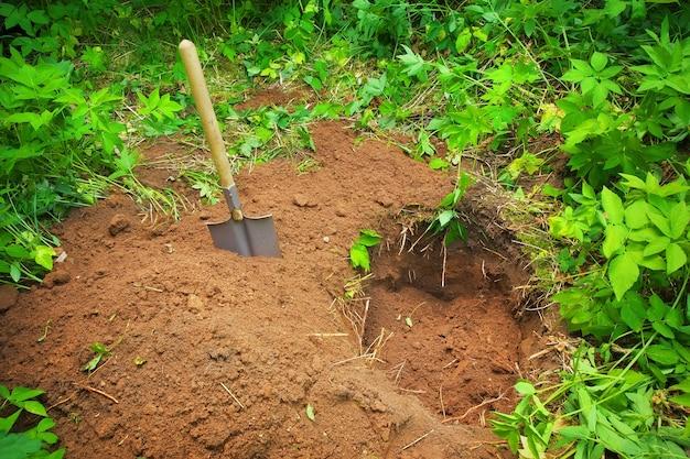 地面に穴を掘ります。宝物を探す