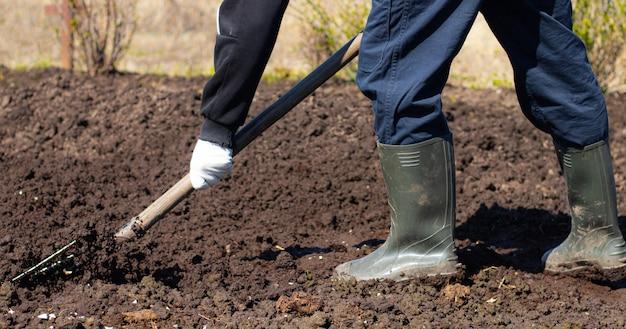 春のベッド掘り。種まき。播種のための土壌の準備。家の庭。村の自己隔離。家庭。