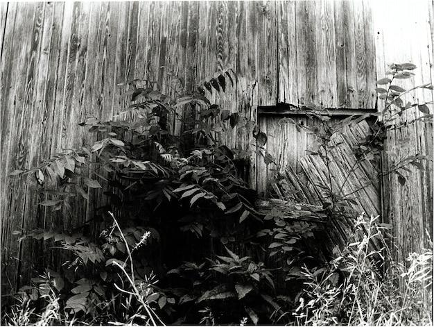 나무 벽과 큰 덤불과 문을 가리는 다른 단풍이 있는 집의 황폐한 면