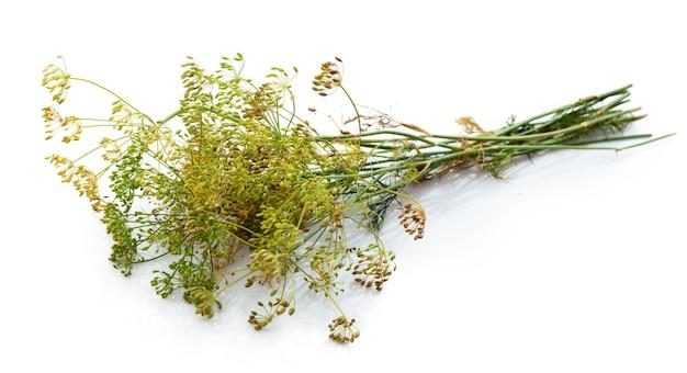 Цветок укропа, изолированные на белом фоне