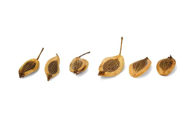 Семена укропа, изолированные на белом фоне, макро макро