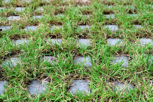 Diminishing perspective of turf stone pavers covered with green grass