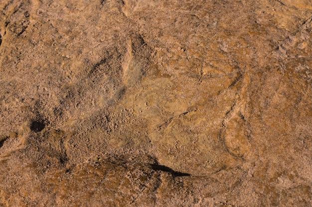 Dinosaur footprints on stone