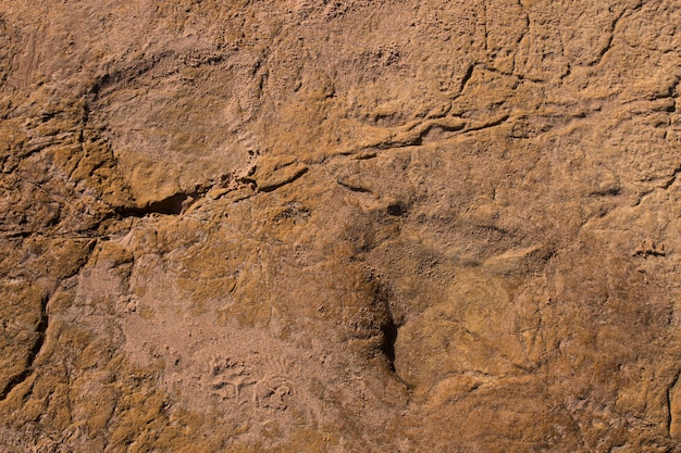 Dinosaur footprints on stone