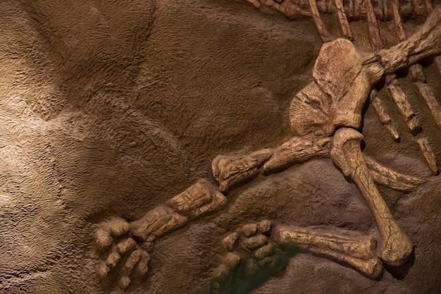 Окаменелость динозавров