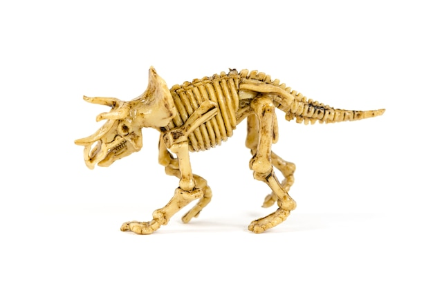 Dinosaur skeleton isolated