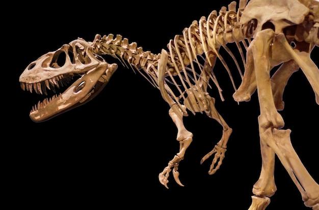 Скелет динозавра на белом фоне