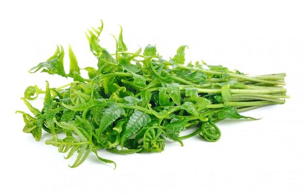 Diplazium esculentum or edible vegetable fern found in asia and oceania