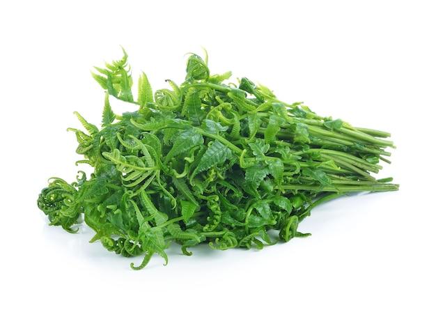 Diplazium esculentum or edible vegetable fern found in asia and