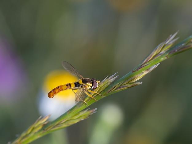 Двуличный. виды мух, сфотографированные в их естественной среде обитания.