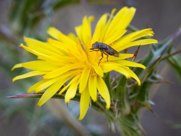 자연 환경에서 촬영한 Dipterous Fly 종 프리미엄 사진