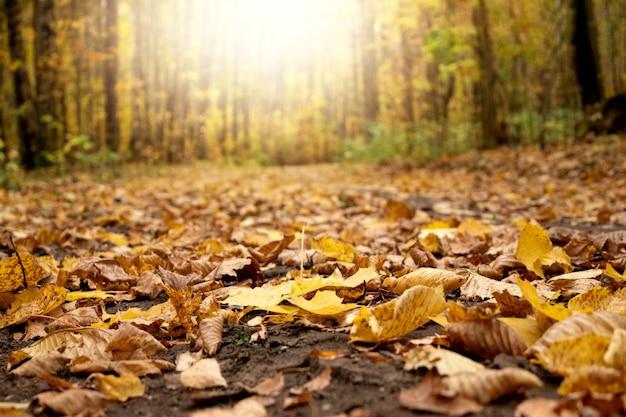 타락한 노란 단풍 가을 풍경으로 덮여 흙 숲길