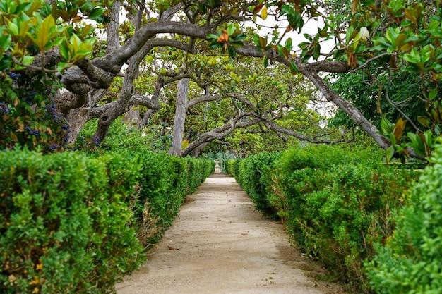 위의 녹색 수풀과 나뭇 가지의 울타리가있는 거대한 정원의 비포장 경로