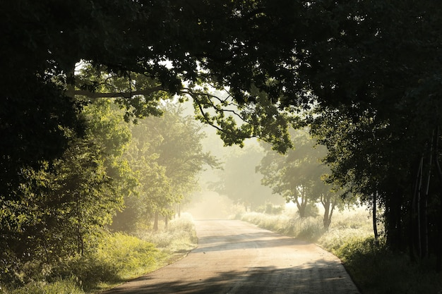 霧の春の朝の降雨後のカエデの木々の間の未舗装の道路