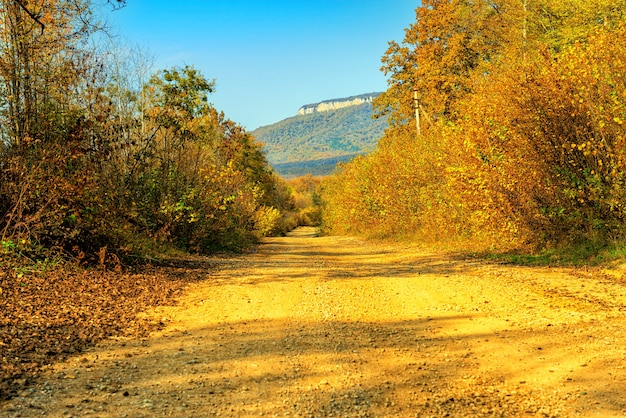 Dirt road in the autumn forest during the day in the bright sun