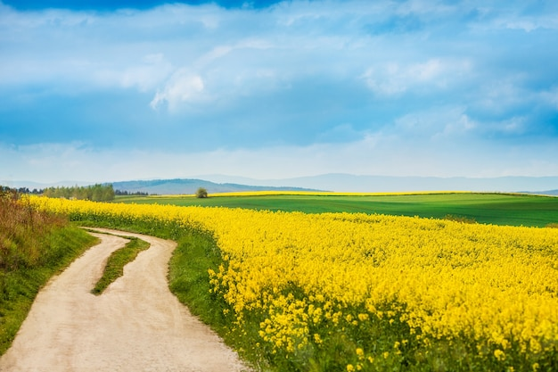 Strada sterrata accanto a campi di colza in fiore