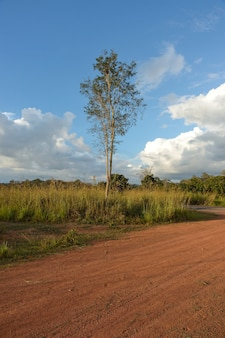 Dirt road in country