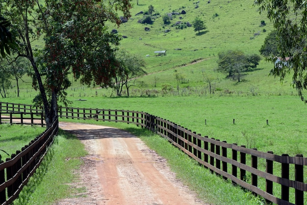 木と草で、暗い木の塀が並ぶ未舗装の道路。ブラジルの田舎