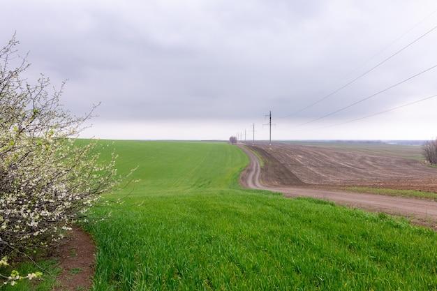 Грунтовая дорога в зеленом поле пшеницы