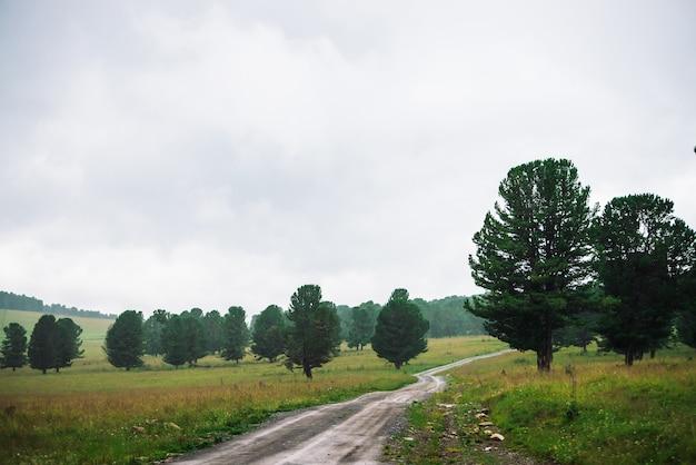 Грунтовая дорога в высокогорье среди хвойных деревьев в пасмурную погоду