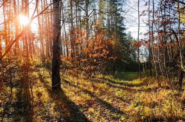 가을 소나무 숲의 흙길