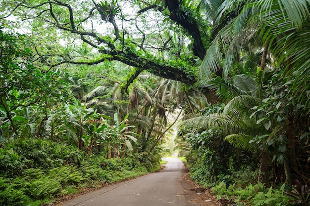 ハワイ島の人里離れたジャングルの未舗装道路 Premium写真