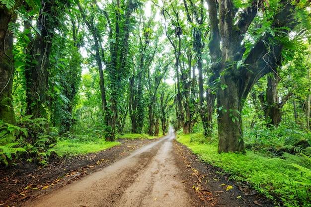 빅 아일랜드, 하와이의 원격 정글에서 비포장 도로