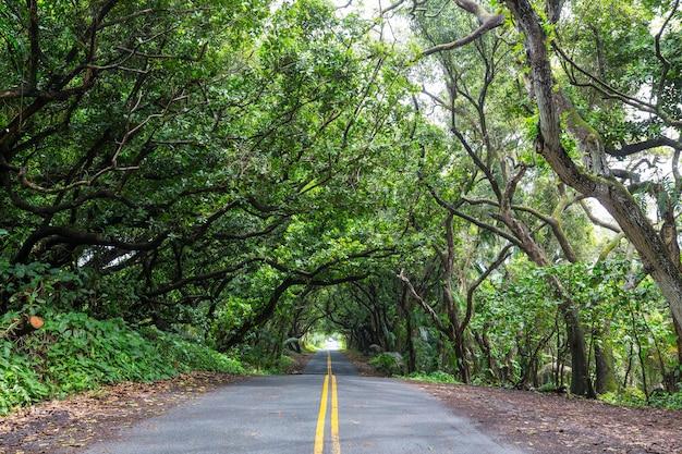 Грунтовая дорога в глухих джунглях на биг-айленде, гавайи