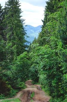 여름에 산으로 숲속의 흙길