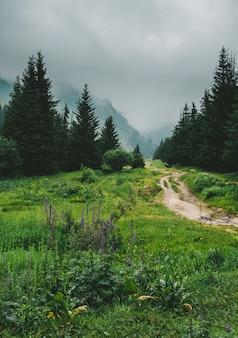 山の未舗装道路は春の霧の森の尾根の頂上に行きます。アルマトイ、カザフスタン、ブタコフ渓谷、天山山系