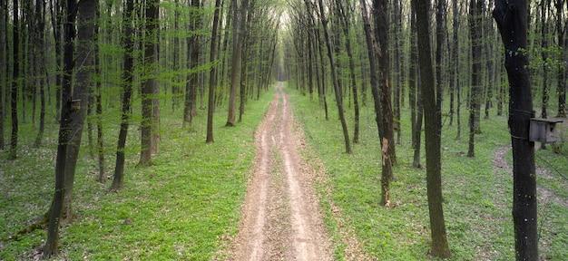春の緑の落葉樹林の未舗装道路。ドローンからの眺め。