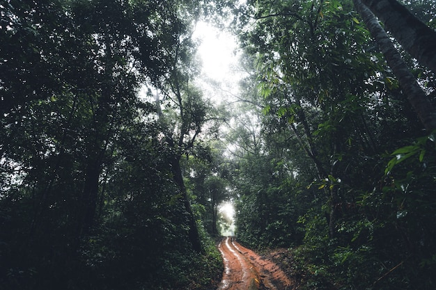 Dirt road into the forest dark green tree fog after rain