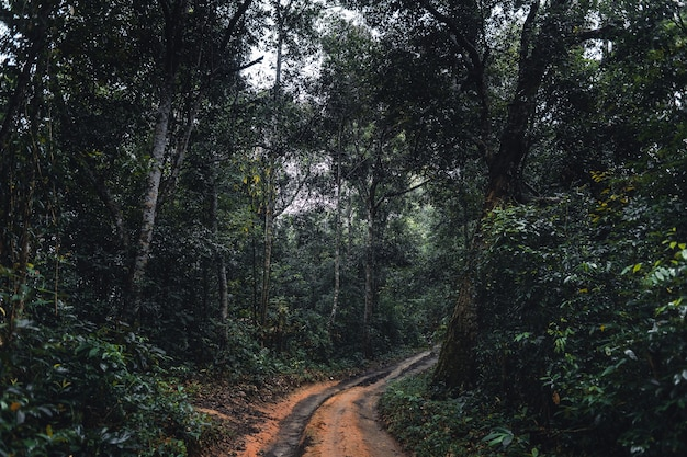 Dirt road into the forest in the tropical rainy season