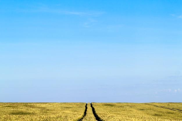여름에 밀밭 풍경에 비포장 도로 경로