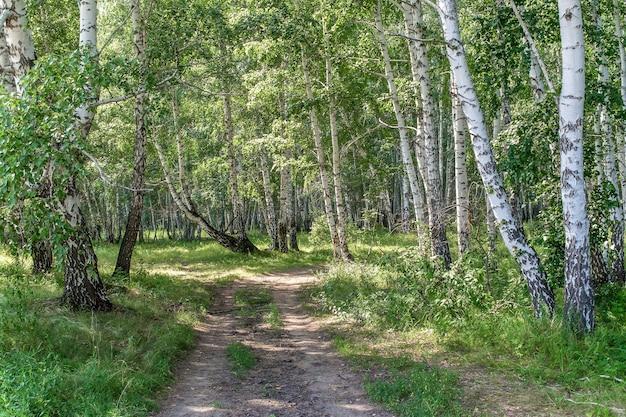 Грунтовая дорога через березовый лес в солнечный день