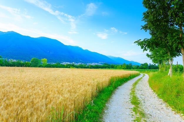 イタリアの田舎の未舗装の道路。小麦畑。田園生活。イタリアの風景